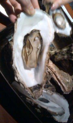 牡蛎三昧。